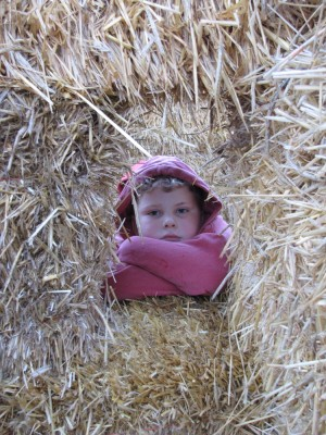 Harvey looking through a window in wall of straw bales