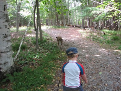 Harvey and Rascal walking through the woods