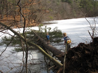 Zion walking out on a giant fallen tree over the ice
