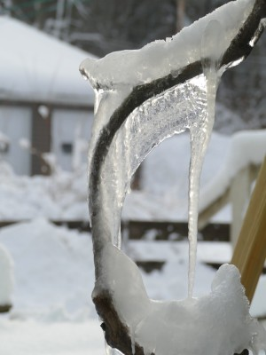 natural ice sculptures on the wisteria