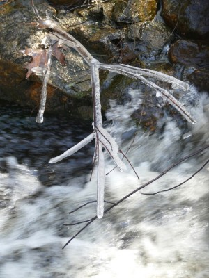 an ice-covered twig above whitewater