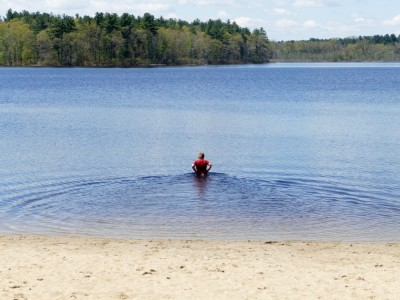 Harvey wading into the water at Long Pond in Acton
