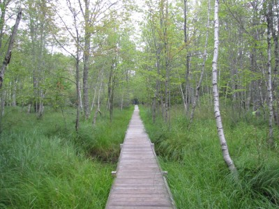 a long straight boardwalk through the woods