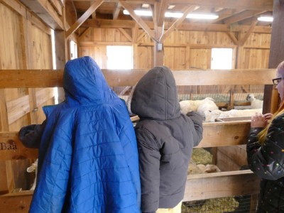 Zion and Lijah watching lambs in the barn