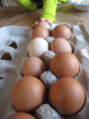 11 varied eggs in a carton
