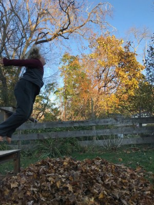 Harvey jumping off a table into a leaf pile