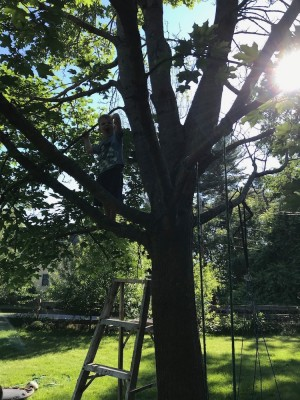 Lijah up high in a tree, with a ladder below him