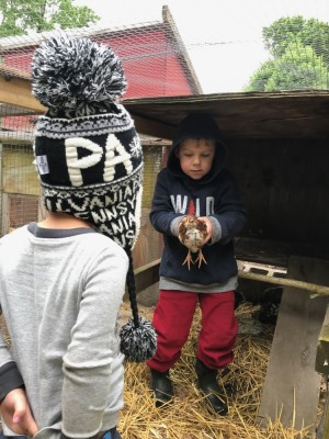 Zion holding one of the young hens, Lijah looking on