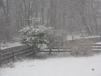 snow falling thickly in the yard