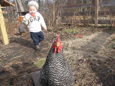 Lijah following a chicken towards the camera