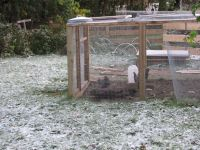 a trace of snow on the grass around the chicken run
