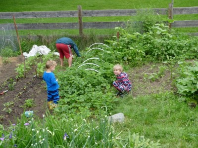 the boys picking strawberries in the garden