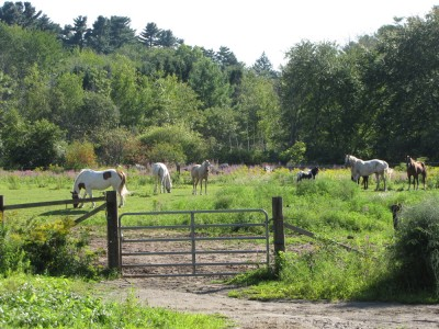 several horses in a small pasture