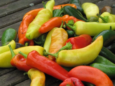 the day's harvest of hot peppers
