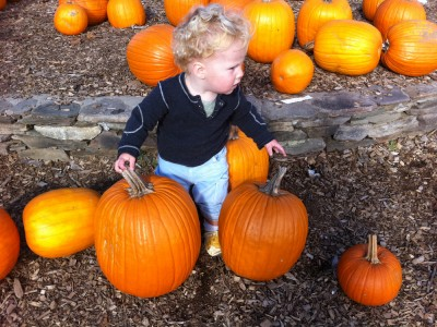 Harvey and some pumpkins at Parlee Farms