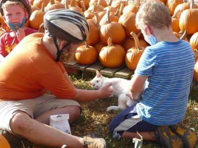 the boys petting a cat amongst piles of pumpkins