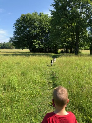 Zion walking on a path in a field with the dogs ahead of him