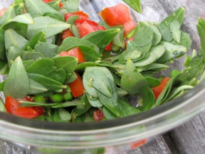 close-up of salad with purslane and tomatoes