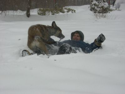 Rascal attacking Danny in the snow