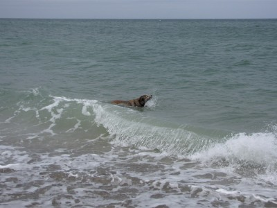 Rascal romping in the cold waves