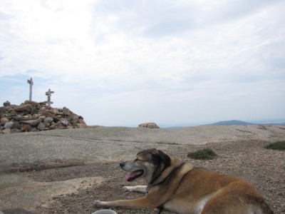 Rascal resting in front of the Sargent Mtn summit