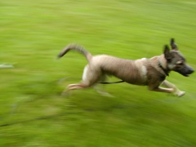 Rascal is a blur at full speed