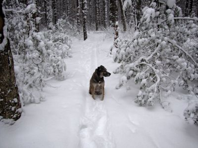 Rascal sits on a snowy path