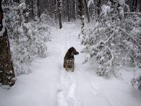 Rascal sits on a snowy path