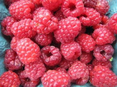 a pint of freshly-harvested raspberries