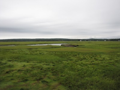 a salt marsh landscape