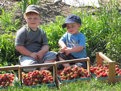 Harvey and Zion posing with the strawberry haul