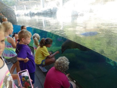 lots of kids looking at the sea lion through the glass