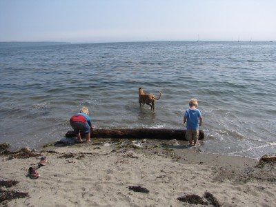 Harvey and Zion trying to get a large log out of the water onto the beach; grayhound Hammy in the water behind them