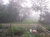 a foggy view off our back porch just before sunrise