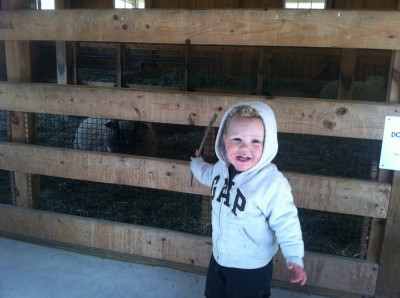 Lijah pointing at the sheep pen in the barn