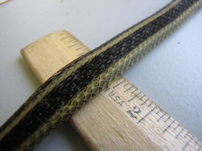 close-up of the snake's back, on a ruler