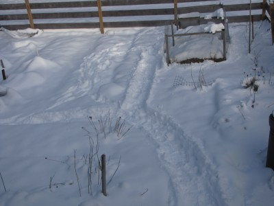 the snowy garden with paths to chickens and compost