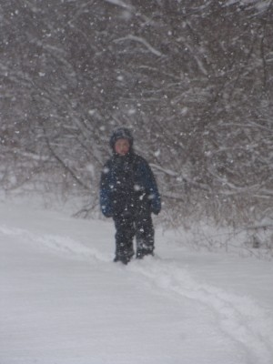 Harvey walking on the edge of the woods through thickly falling snow