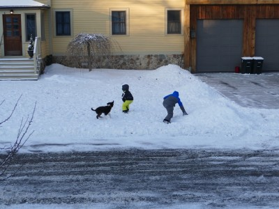 Harvey and Zion playing in the snow with a puppy
