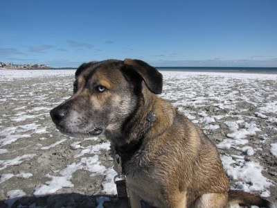 Rascal on the snowy beach