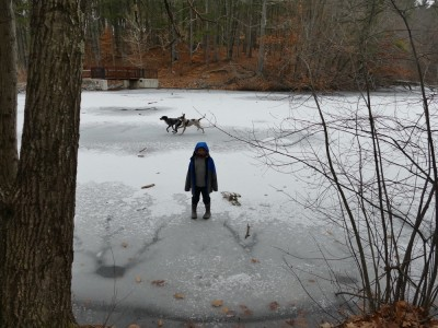 Zion standing on ice of a pond, the dogs running behind him
