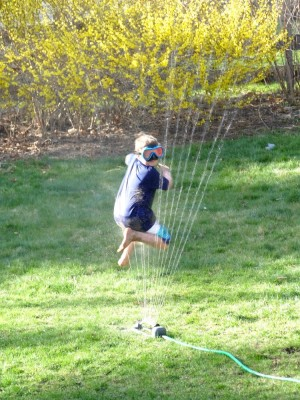 Zion jumping through the sprinkler in front of forsythia