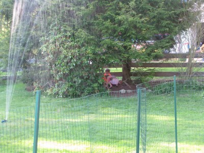 the boys and a friend playing under the trees by the fence, with the sprinkler going on the lawn
