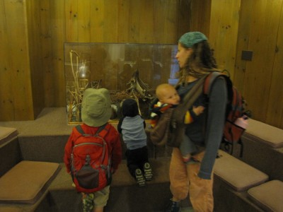Leah and the boys looking at taxidermy in the nature center