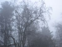 trees through the thick fog on Sunday morning