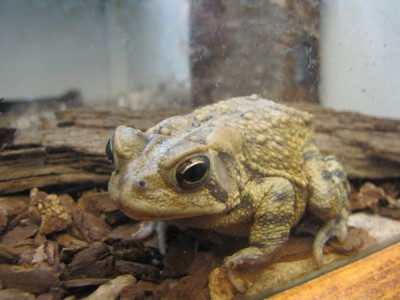 a toad in its terrerium