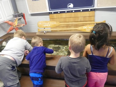 the boys and Kamilah reaching into the touch tank at the Woods Hole aquarium