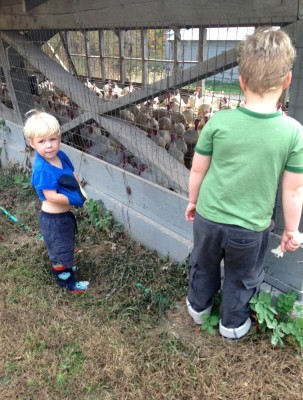 Zion and Harvey at a farm looking at a pen full of turkeys