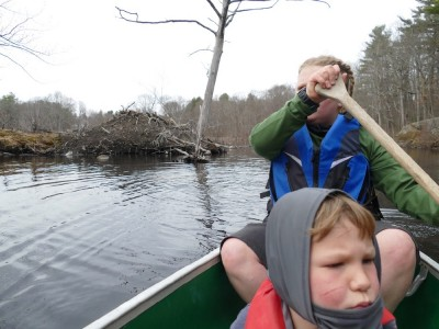 Harvey rowing our canoe past a beaver lodge
