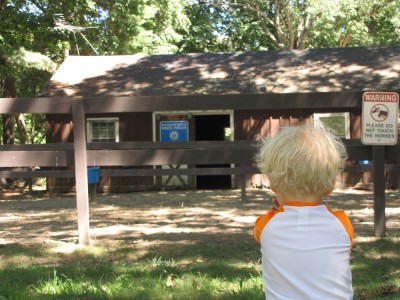 Zion looking at the empty State Police horse barn